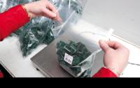 Holandia praca na produkcji od zaraz przy składaniu, pakowaniu Venray