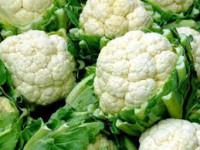 Od zaraz praca w Holandii przy zbiorach warzyw bez znajomości języka Obdam