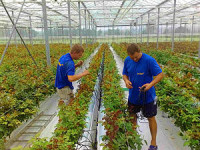 Praca Holandia w ogrodnictwie bez języka i doświadczenia Eindhoven od zaraz
