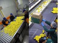 Praca w Holandii na produkcji przy pakowaniu spożywczym bez języka Breda