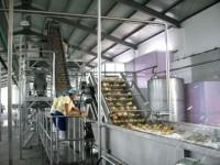 Holandia praca na produkcji przy pakowaniu warzyw bez języka Heinenoord