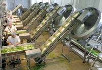 Praca Holandia pakowanie produktów mrożonych na linii produkcyjnej Waalwijk