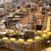 pakowanie-sera-produkcja2
