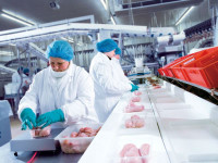 Pakowanie drobu przy taśmie oferta pracy w Holandii od zaraz Goor