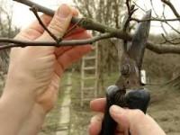 Oferta fizycznej pracę w Holandii bez języka przycinanie drzewek Dronten