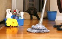 Bez znajomości języka Holandia praca fizyczna przy sprzątaniu mieszkań