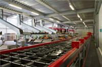 Bez znajomości języka Holandia praca na produkcji przy pakowaniu warzyw