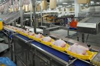 Bez znajomości języka dam pracę w Holandii dla kobiet przy pakowaniu drobiu