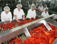 Dam pracę w Holandii na produkcji spożywczej bez języka Eindhoven