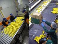 Fizyczna praca w Holandii przy pakowaniu owoców bez języka Barendrecht