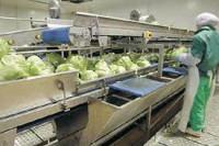Fizyczna praca Holandia w Roosendaal dla par bez języka pakowanie żywności