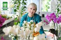 Holandia praca sezonowa w ogrodnictwie przy kwiatach – orchideach Lelystad