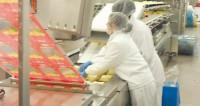 Bez znajomości języka praca Holandia od zaraz na produkcji przekąsek serowych