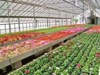 Holandia praca w ogrodnictwie bez języka Emmen przy kwiatach i warzywach