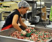 Ogłoszenie pracy w Holandii przy pakowaniu słodyczy bez języka Veghel