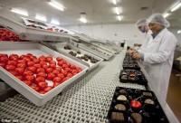 Od zaraz Holandia praca bez znajomości języka Veghel pakowanie słodyczy