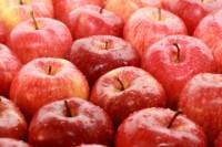 Oferta sezonowej pracy w Holandii bez języka zbiory jabłek od zaraz Venlo