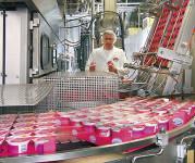 Od zaraz praca w Holandii bez języka Limburgia na produkcji jogurtów