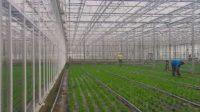 Ogrodnictwo praca w Holandii w szklarni dla par, Haga od 31.01.2017