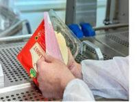 Od zaraz praca Holandia bez języka przy pakowaniu sera od zaraz Zegveld 2017