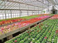 Oferta pracy w Holandii w szklarni – ogrodnictwo przy kwiatach 2017