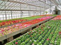 Od zaraz praca w Holandii w ogrodnictwie przy kwiatach w szklarni, Haga