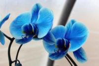 Ogrodnictwo praca w Holandii od zaraz w szklarni przy kwiatach-orchideach, Moerkapelle