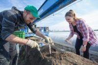 Zbiór szparagów – praca sezonowa w Holandii kwiecień 2018, Venlo
