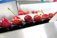 Praca Holandia na produkcji od zaraz przy sortowaniu, pakowaniu owoców dla par, Venlo
