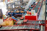 Holandia praca dla par bez znajomości języka przy pakowaniu owoców i warzyw, Haga