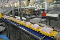 Pakowanie lub filetowanie drobiu Holandia praca dla par