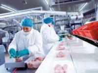 Dla par praca w Holandii od zaraz przy pakowaniu mięsa drobiowego bez języka, Haga