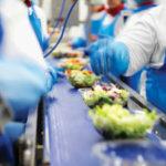 Praca Holandia na produkcji dla kobiet przy sortowaniu warzyw bez języka, Haga