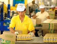 Od zaraz Holandia praca przy produkcji sera w Almere, Culemborg, Tiel, Woerden