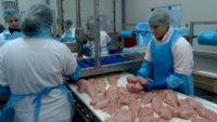 Dla par praca w Holandii od zaraz przy pakowaniu kurczaków, Zeddam