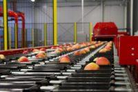 Dla par dam pracę w Holandii przy pakowaniu-sortowaniu owoców bez języka w Venlo