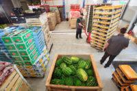 Praca w Holandii na magazynie z warzywami i owocami 2019