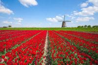 Dam sezonową pracę w Holandii na wakacje 2019 (lipiec, sierpień, wrzesień)