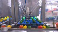 Oferta pracy w Holandii na produkcji przy sortowaniu warzyw i owoców, Barendrecht