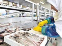 Dam pracę w Holandii bez języka na produkcji rybnej w przetwórni z Vlissingen