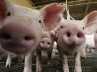 Sezonowa praca w Holandii jako pomoc na farmie w rolnictwie Plombieres