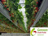 Holandia praca bez języka w ogrodnictwie przy truskawkach i sadzonkach od zaraz Someren
