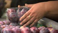 Praca w Holandii pakowanie owoców i warzyw od zaraz bez języka w Venlo