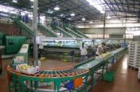Praca Holandia na produkcji operatorem maszyny sortujaco-pakujacej, Dinteloord