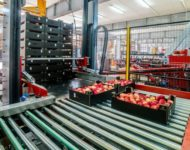 Bez języka praca w Holandii od zaraz przy pakowaniu owoców i warzyw w Venlo