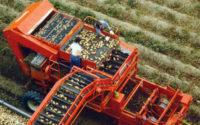Dam sezonową pracę w Holandii przy zbiorach ziemniaków bez języka w Oosterhout