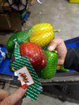Holandia praca fizyczna od zaraz sortowanie i pakowanie warzyw lub owoców, Haga