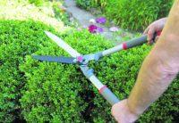 Dam fizyczną pracę w Holandii jako ogrodnik-pracownik pielęgnacji zieleni, Noord Brabant