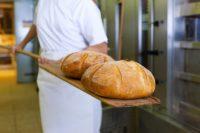 Oferta pracy w Holandii bez języka na produkcji pieczywa w piekarni z Tilburga od zaraz