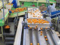 Bez języka Holandia praca na produkcji – pakowanie, sortowanie owoców i warzyw, Haga